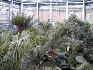 The Palm House interior view