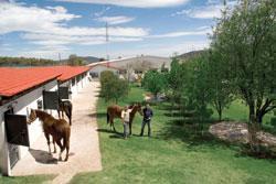 Jaguares, caballos y pollos: Por Dios! - TheFabricator.com
