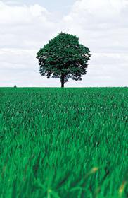 green tree and green grass